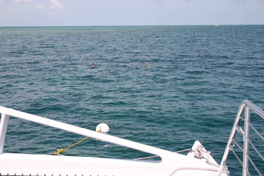 snorkeling Key West 03