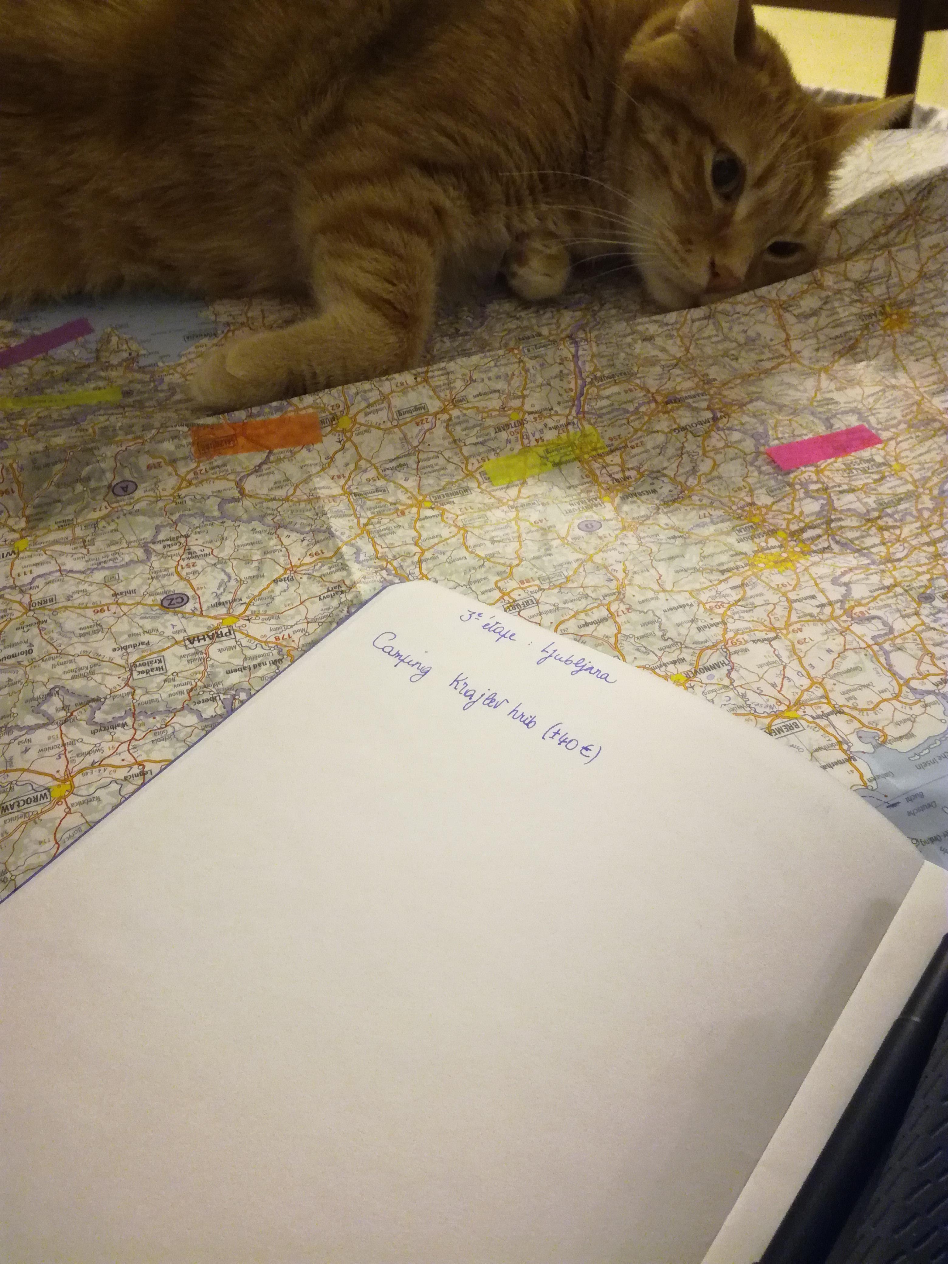 Le chat Roger et la carte de Croatie